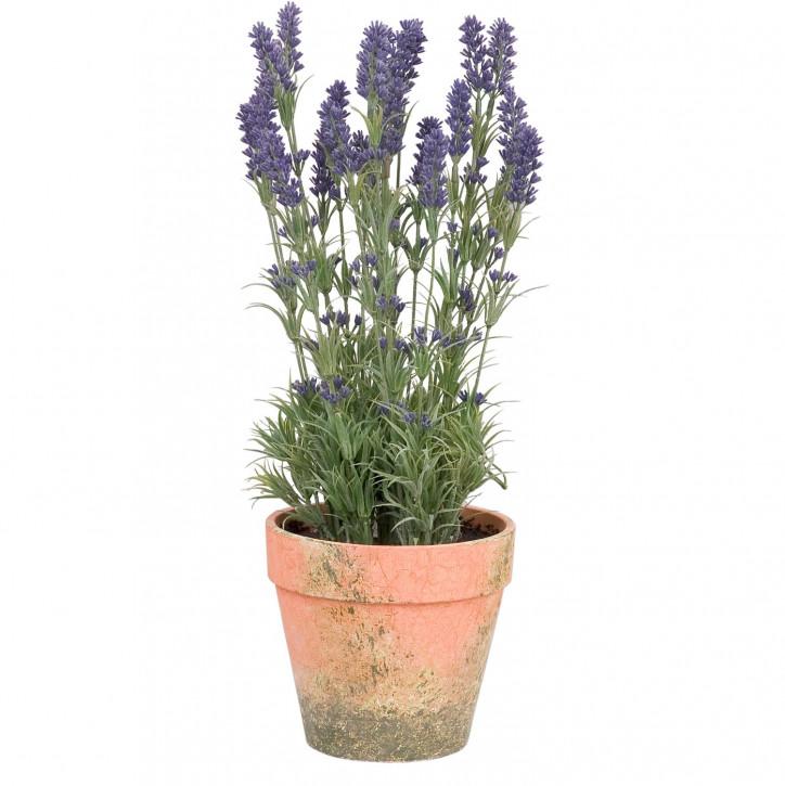 Dekoration Lavendel im Topf