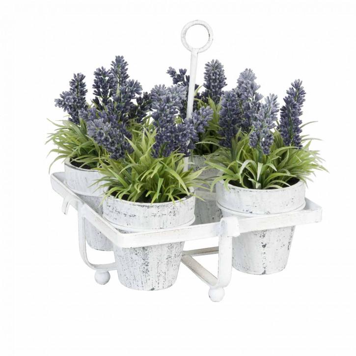 Lavendel Töpfchen in weiß