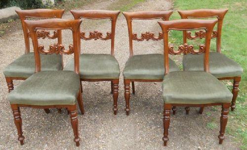 6 stk viktorianische englische Mahagoni Esszimmer Stühle antik ca 1850