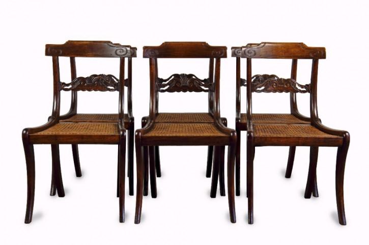 6 William IV. Antike Englische Buchen Esszimemrstühle ca. 1835
