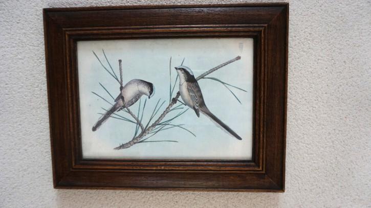 Holzrahmen mit schönem Vogelmotiv  Vintage