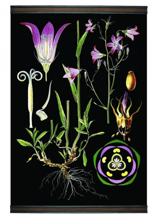 Bellflower Botanic Chart