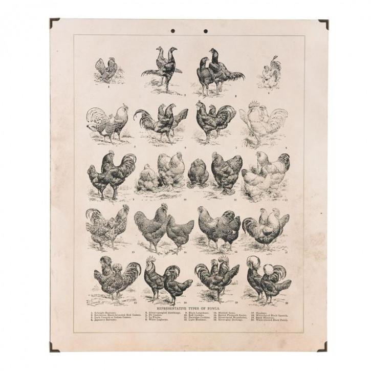 Wandkarte Hühner 50x1x60 cm
